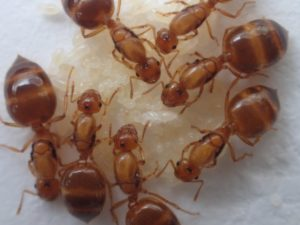 女王アリを採集して飼育する方法【アリ採集の基本】