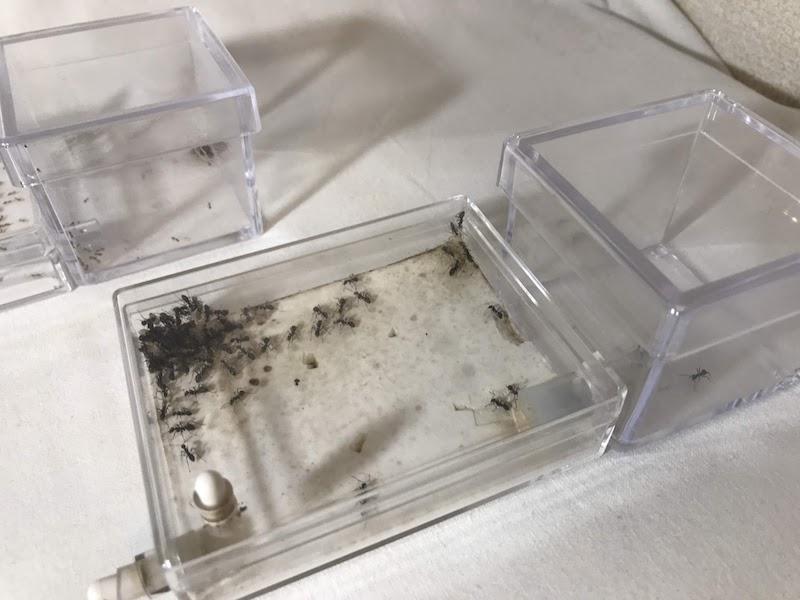 平型蟻飼育ケース