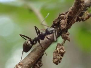 アリの飼育方法とオススメを解説!アリ飼育マニュアル【初心者対応版】