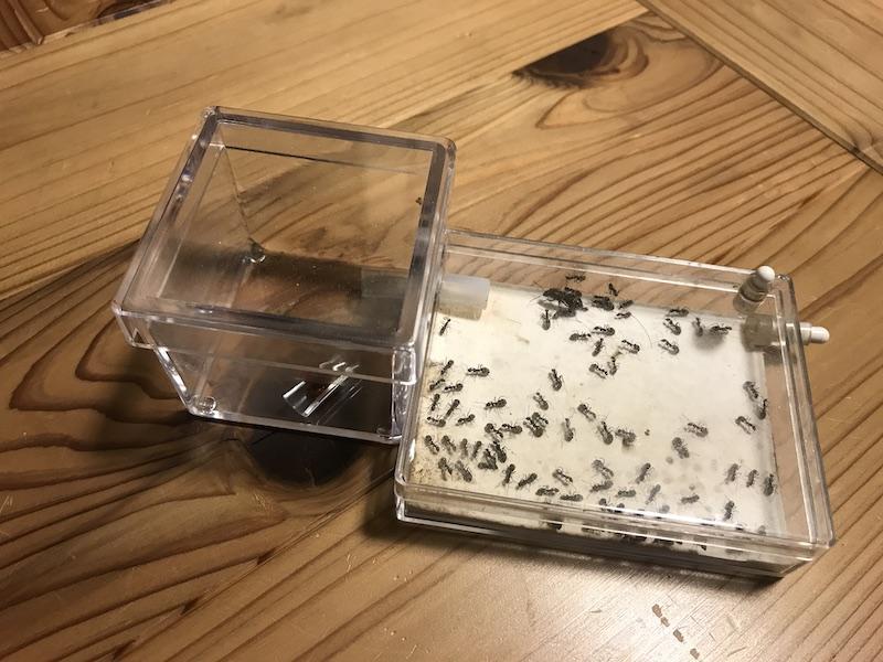 アリの飼育容器