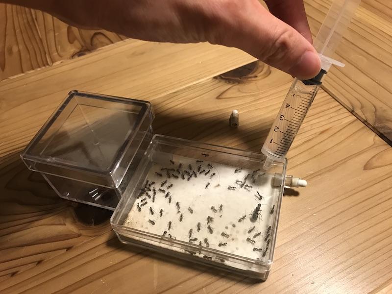 アリの巣の給水